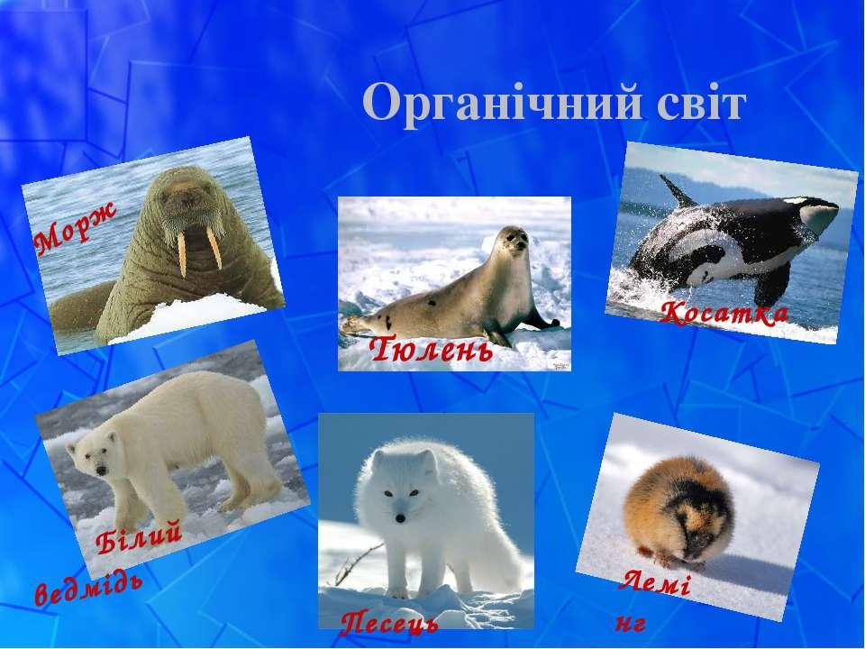 Органічний світ Морж Тюлень Білий ведмідь Песець Косатка Лемінг