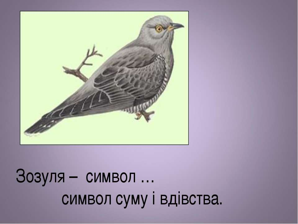 Зозуля – символ … символ суму і вдівства.