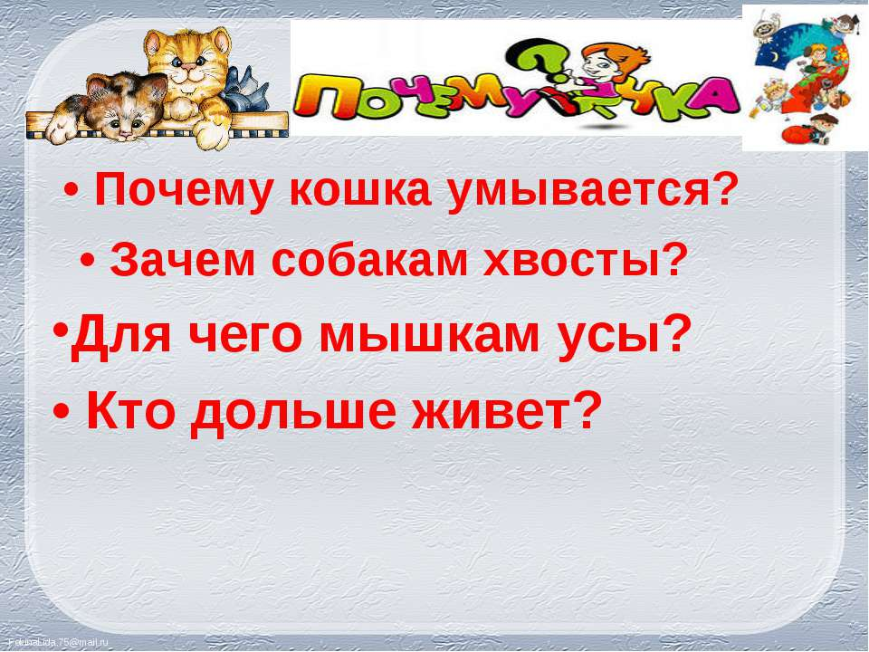 • Почему кошка умывается? • Почему кошка умывается? • Зачем собакам хвосты? Д...