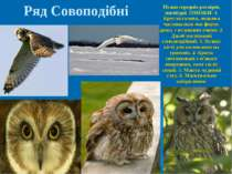 Птахи середніх розмірів, нагніздні. ОЗНАКИ: 1. Кругла голова, лицьова частина...