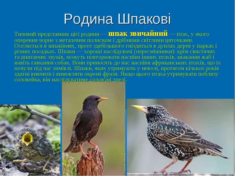 Родина Шпакові Типовий представник цієї родини — шпак звичайний — птах, у яко...
