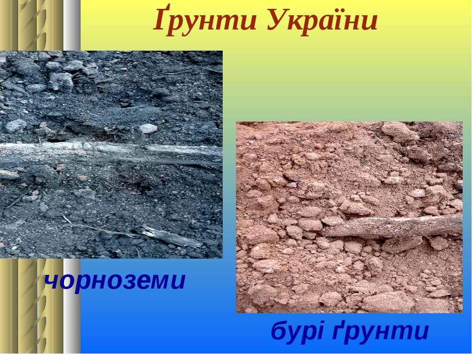 Ґрунти України чорноземи бурі ґрунти