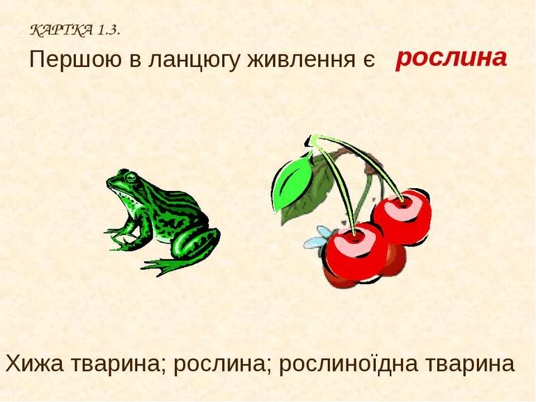 КАРТКА 1.3. Першою в ланцюгу живлення є Хижа тварина; рослина; рослиноїдна тв...