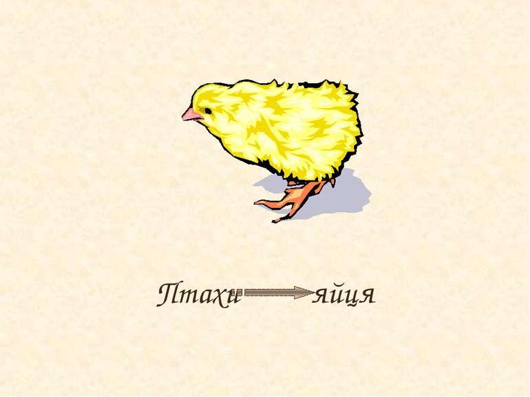 Птахи яйця