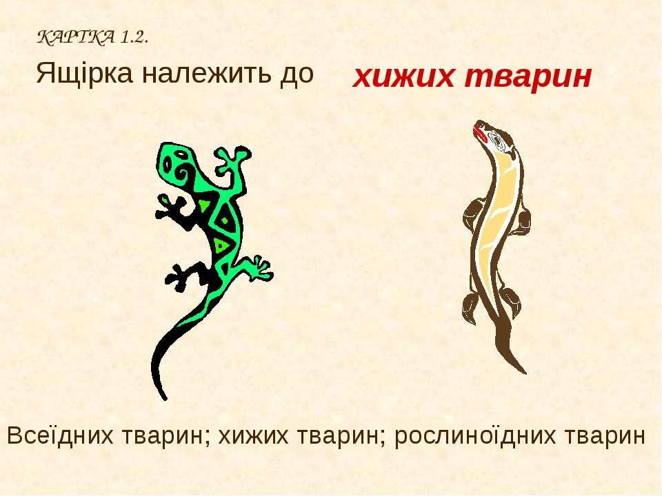 КАРТКА 1.2. Ящірка належить до хижих тварин Всеїдних тварин; хижих тварин; ро...