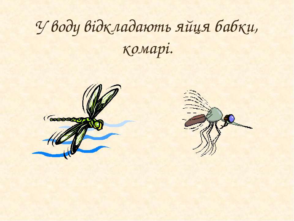 У воду відкладають яйця бабки, комарі.