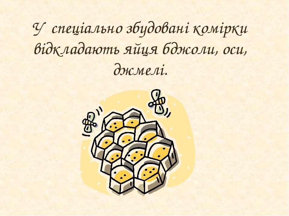 У спеціально збудовані комірки відкладають яйця бджоли, оси, джмелі.