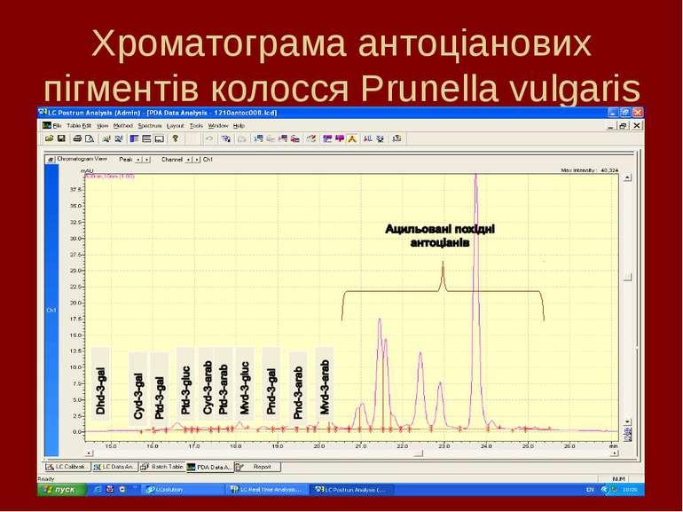 Хроматограма антоціанових пігментів колосся Prunella vulgaris