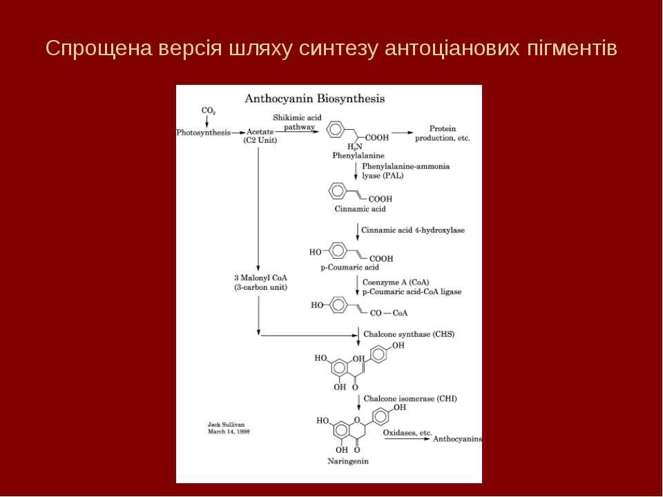 Спрощена версія шляху синтезу антоціанових пігментів