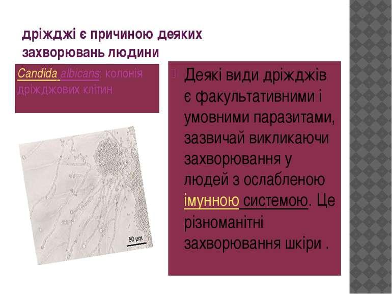 дріжджі є причиною деяких захворювань людини Candida albicans: колонія дріждж...