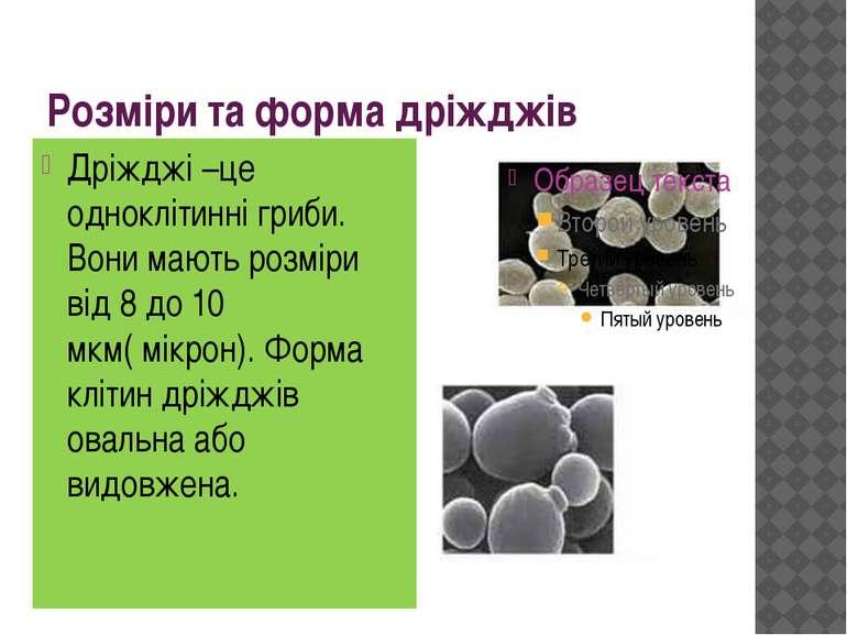Розміри та форма дріжджів Дріжджі –це одноклітинні гриби. Вони мають розміри ...