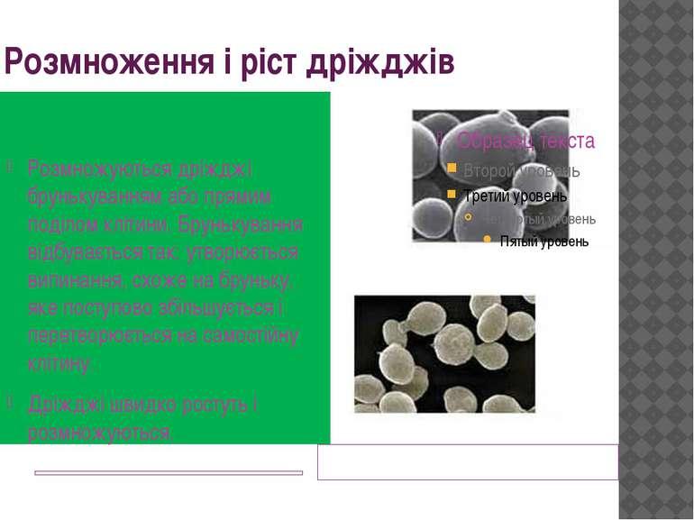 Розмноження і ріст дріжджів Дріжджі під мікроскопом Розмножуються дріжджі бру...