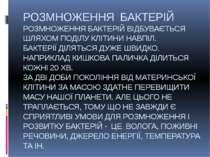 РОЗМНОЖЕННЯ БАКТЕРІЙ РОЗМНОЖЕННЯ БАКТЕРІЙ ВІДБУВАЄТЬСЯ ШЛЯХОМ ПОДІЛУ КЛІТИНИ ...