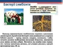 Бактерії симбіонти