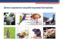 Шляхи зараження хвороботворними бактеріями