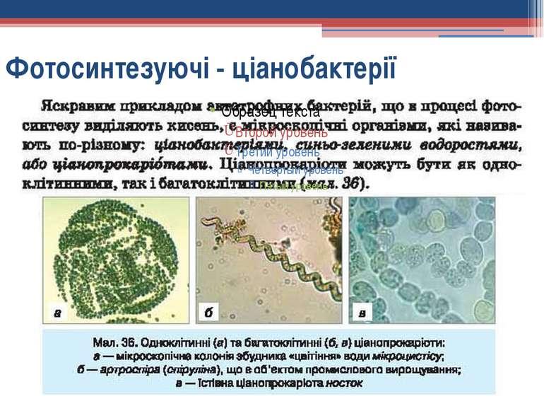 Фотосинтезуючі - ціанобактерії