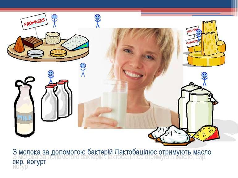 З молока за допомогою бактерій Лактобацілюс отримують масло, сир, йогурт З мо...