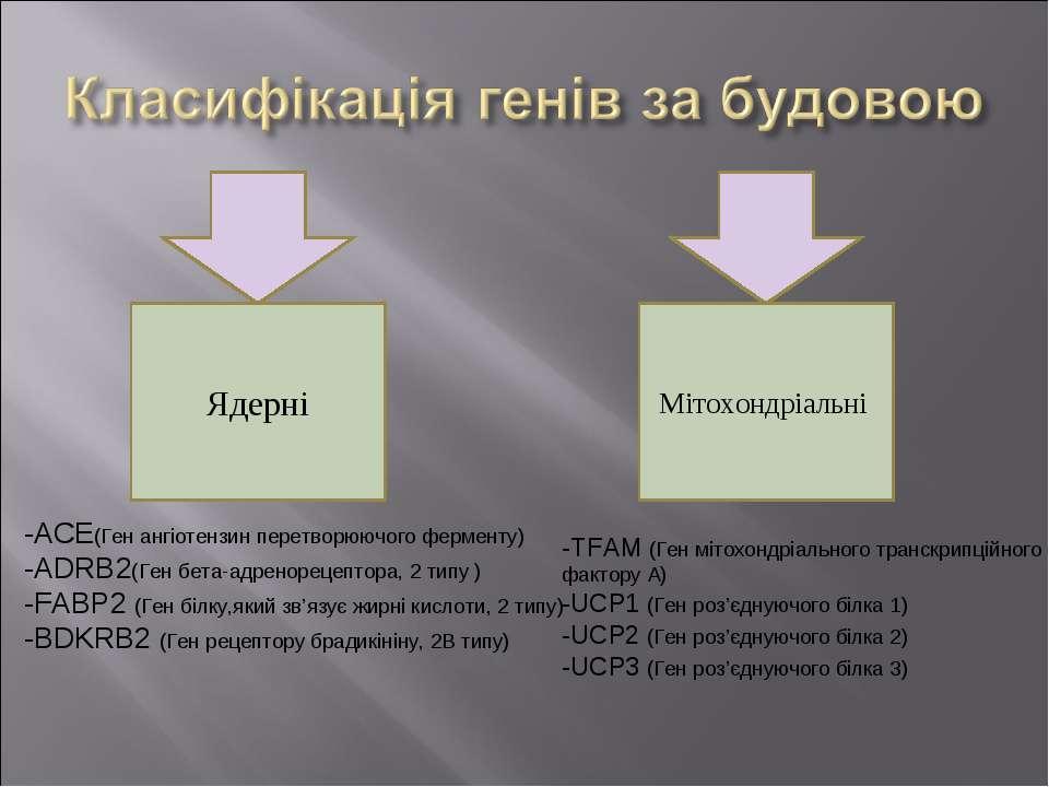 Ядерні Мітохондріальні -ACE(Ген ангіотензин перетворюючого ферменту) -ADRB2(Г...