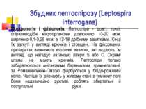 Збудник лептоспірозу (Leptospira interrogans) Морфологія і фізіологія. Лептос...
