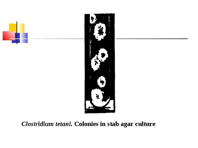 Clostridium tetani. Colonies in stab agar culture