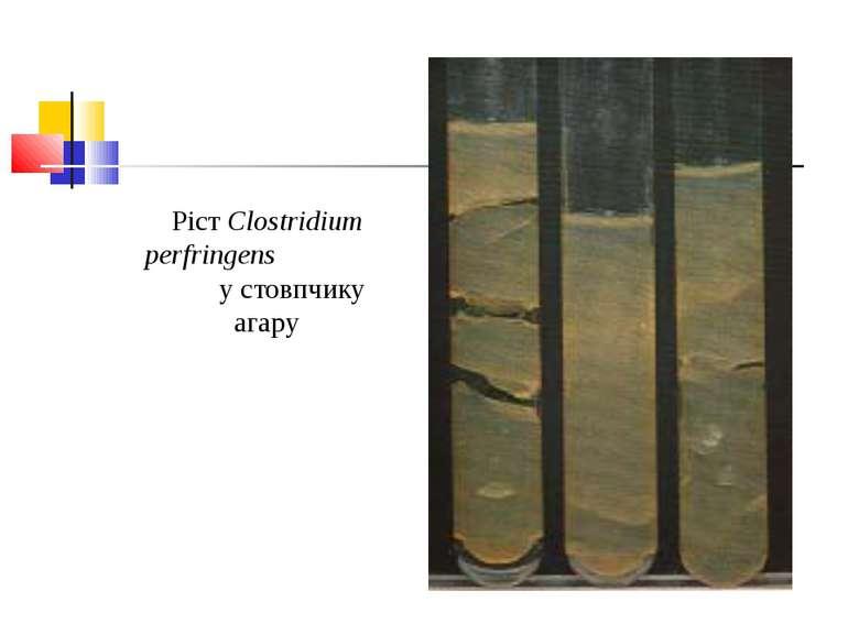 Ріст Clostridium perfringens у стовпчику агару