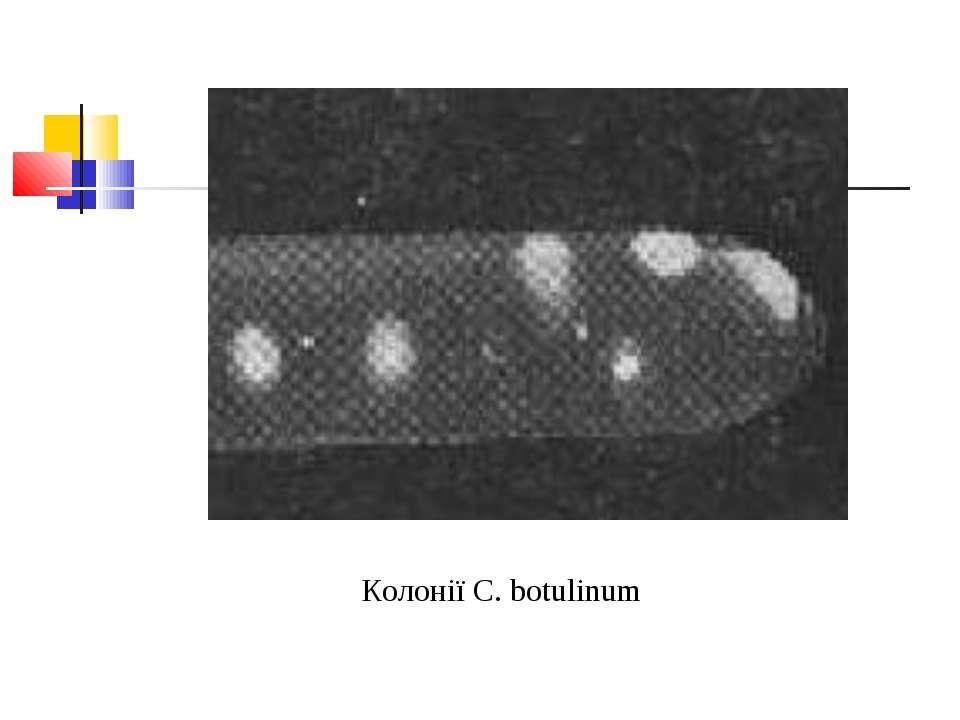 Колонії C. botulinum