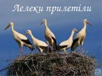 Лелеки прилетіли