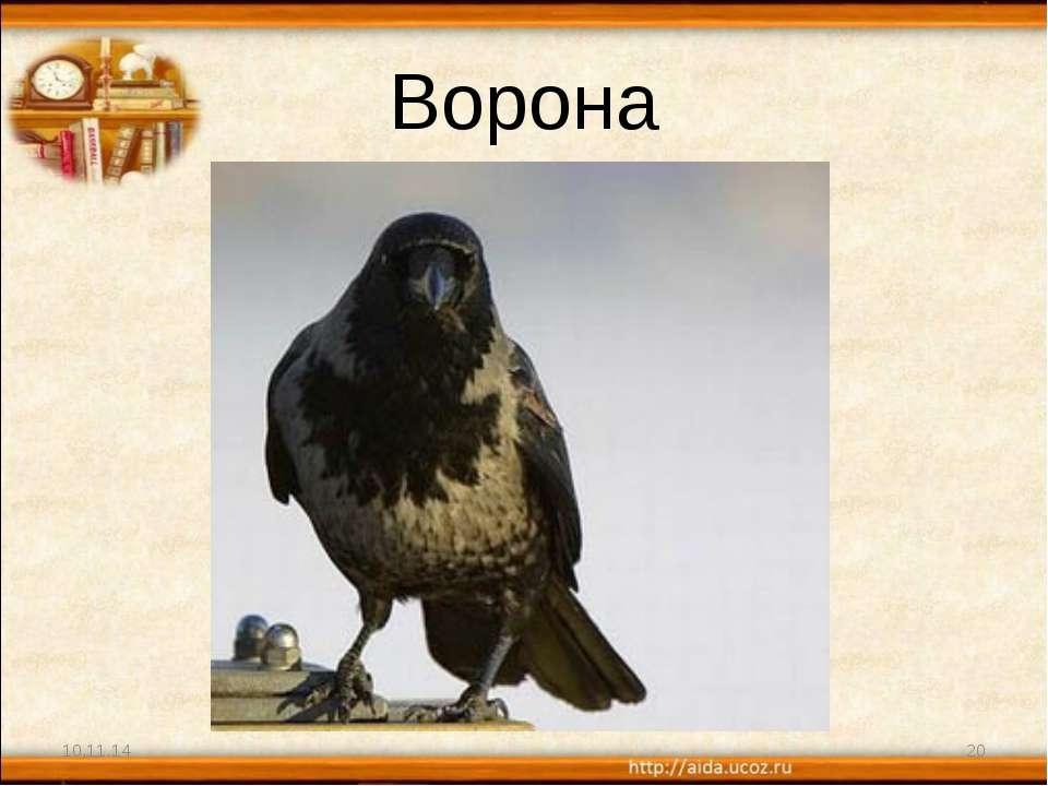 Ворона * *