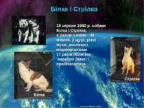 Білка і Стрілка 19 серпня 1960 р. собаки Білка і Стрілка, а разом з ними - 40...