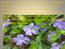 Одним з найулюбленіших символів є барвінок. Цю рослину назвали так на честь к...
