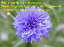 Наступна квітка – волошки. Символізує чисту радість та сподівання, що живуть ...