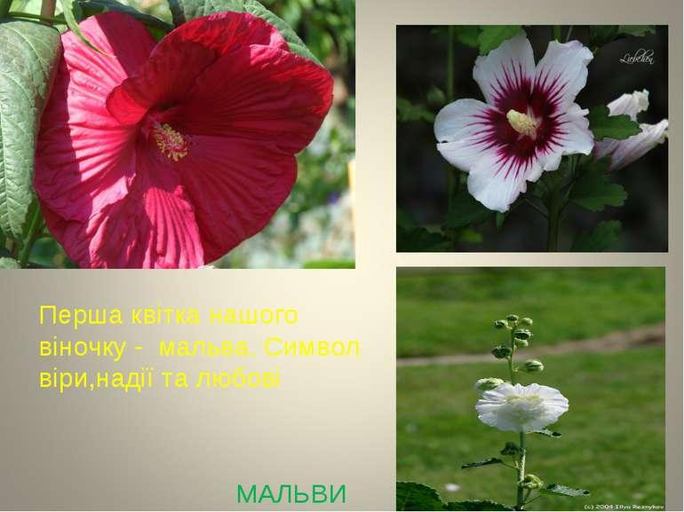 МАЛЬВИ Перша квітка нашого віночку - мальва. Символ віри,надії та любові