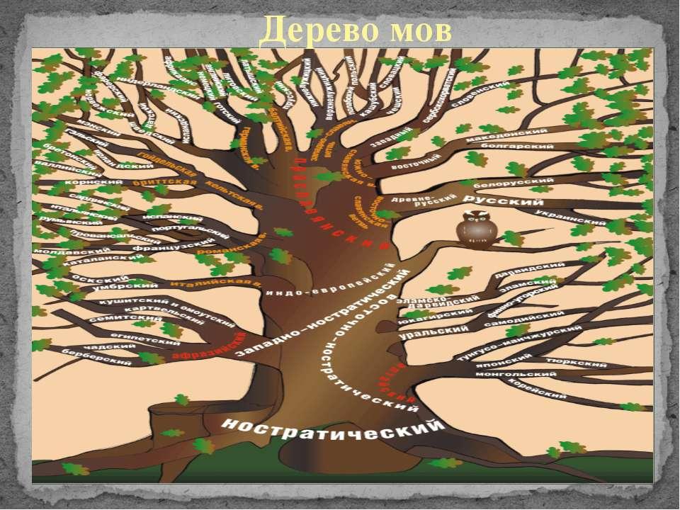Дерево мов