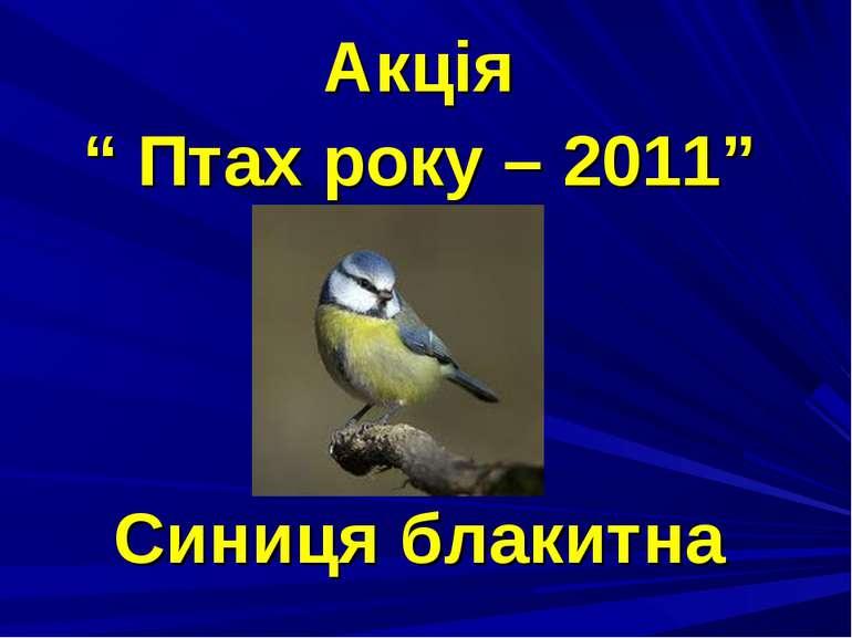 """Акція """" Птах року – 2011"""" Синиця блакитна"""