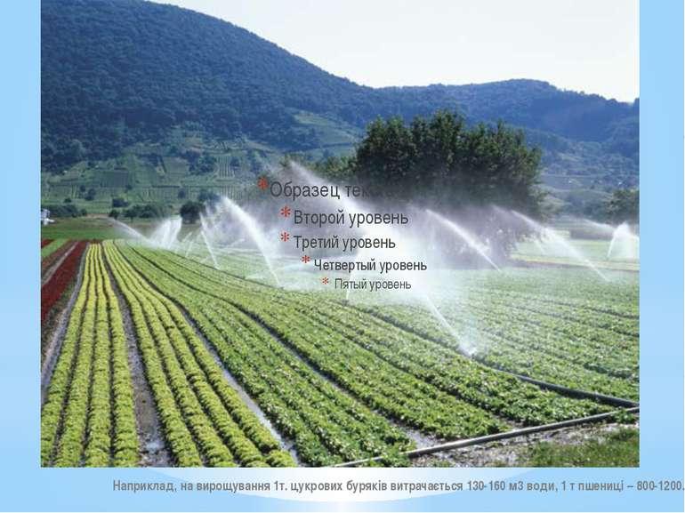 Наприклад, на вирощування 1т. цукрових буряків витрачається 130-160 м3 води, ...