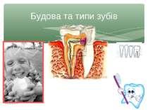 Будова та типи зубів Рябоконь О.А. Рябоконь О.А.