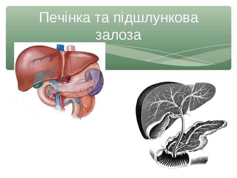 Печінка та підшлункова залоза