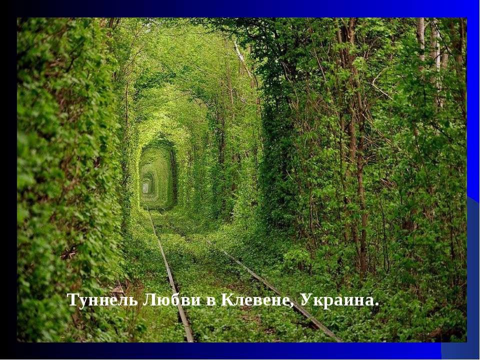 Туннель Любви в Клевене, Украина.