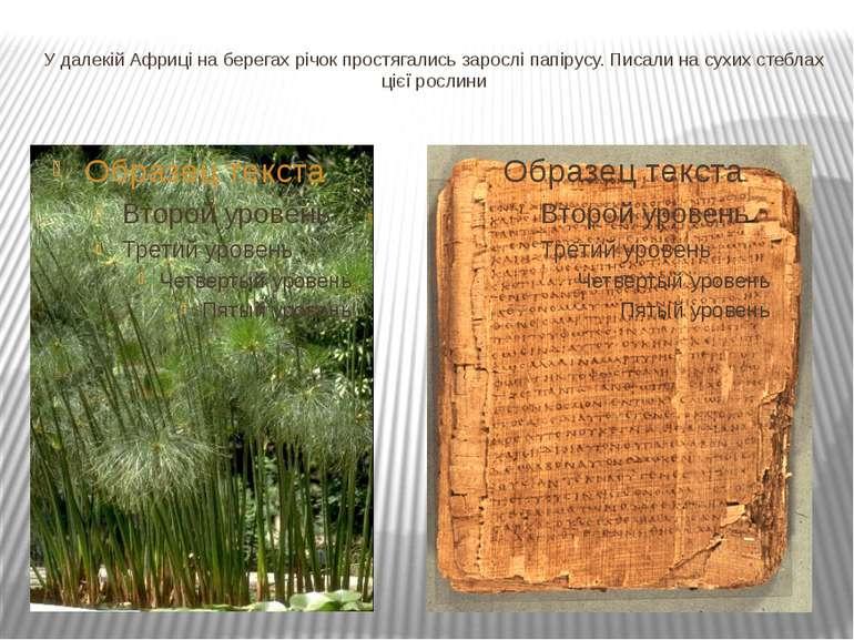У далекій Африці на берегах річок простягались зарослі папірусу. Писали на су...