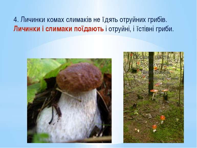 4. Личинки комах слимаків не їдять отруйних грибів. Личинки і слимаки поїдают...