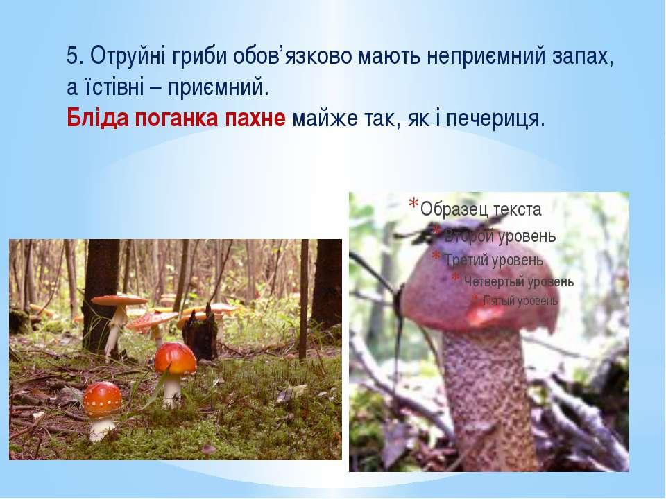 5. Отруйні гриби обов'язково мають неприємний запах, а їстівні – приємний. Бл...