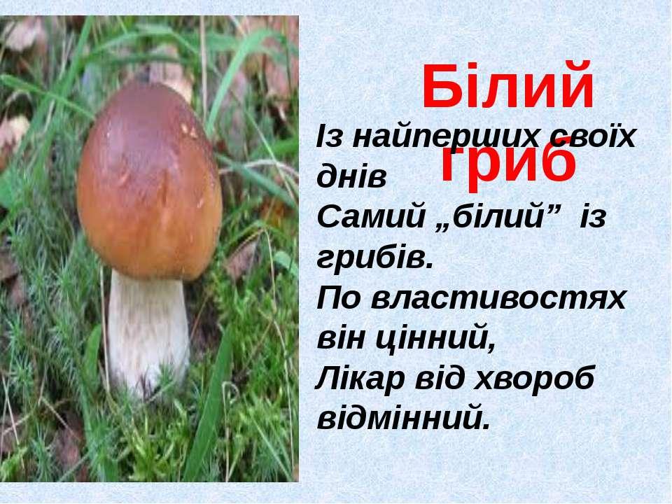 """Білий гриб Із найперших своїх днів Самий """"білий"""" із грибів. По властивостях в..."""