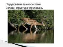 Угруповання та екосистеми. Склад і структура угруповань