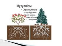 Мутуалізм