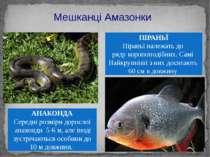Мешканці Амазонки АНАКОНДА Середні розміри дорослої анаконди 5-6 м, але іноді...