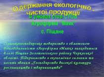 """В умовах стов СТОВ """"Агрофірми """"Маяк"""" с. Піщане Сільськогосподарське товариств..."""