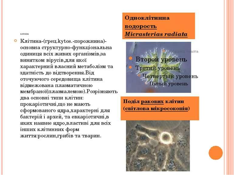клітина Клітина-(грец.kytos.-порожнина)-основна структурно-функціональна один...