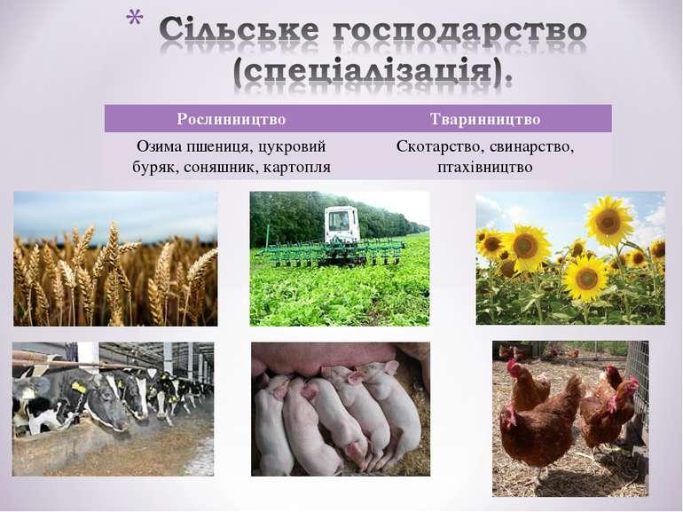 Рослинництво Тваринництво Озима пшениця, цукровий буряк, соняшник, картопля С...