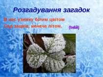 Розгадування загадок В нас узимку білим цвітом Сад зацвів, неначе літом. (Іній)