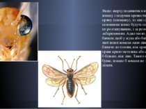 Якщо зверху подивитися на будь-яку комаху і подумки провести посередині пряму...